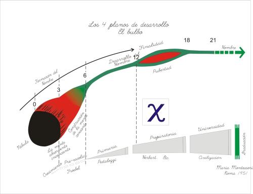 el_bulbo_cuatro_planos_de_desarrollo